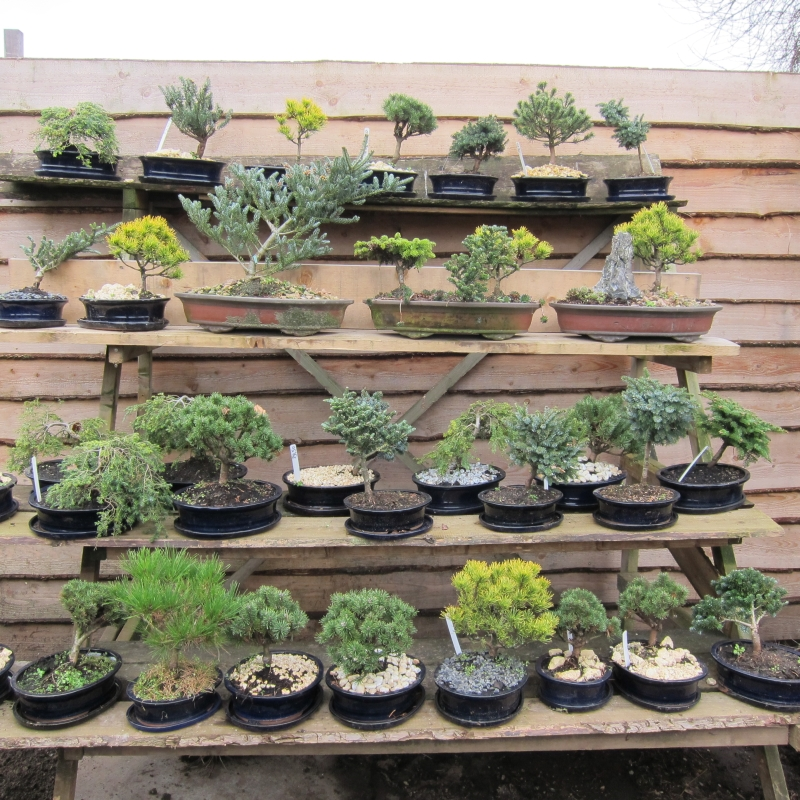 Diverse bonsai in schalen